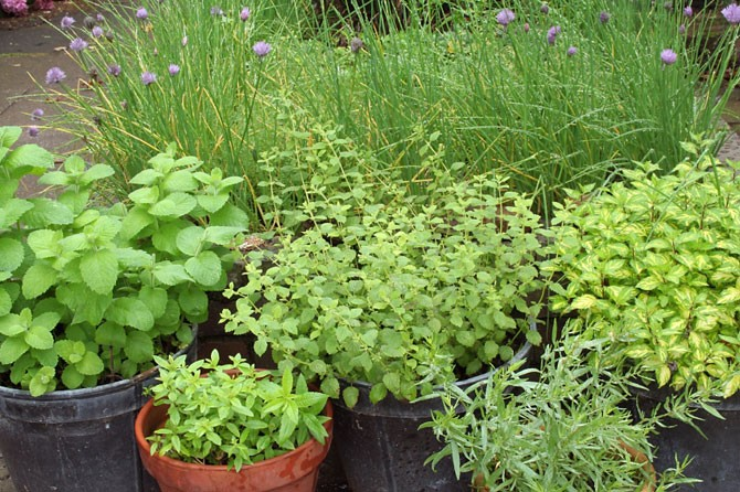 zahrada s bylinkami