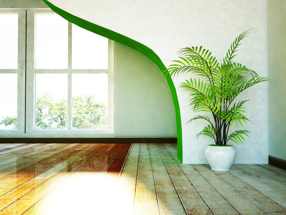 jak vypěstovat palmy ze semen