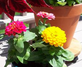 Jak vybrat správnou nádobu pro jarní výsevy?