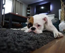 Použít koberec jako doplněk do domácnosti? Ano? Ne?