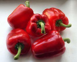 Pěstování paprik
