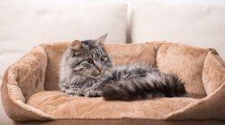 Pořízení kočky aneb Připravte na ni svůj byt