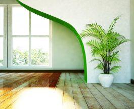Exotika přímo v obýváku – vypěstujte si palmy ze semen