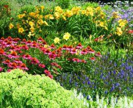Okrasné rostliny. Vytvořte si vlastní oázu klidu
